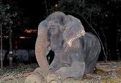Night of Raju's rescue