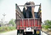 Raju's ride to Wildlife SOS sanctuary