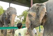 Raju getting acquainted with new family