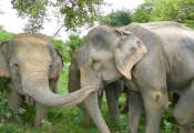 Raju being greeted by his new friends