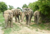Raju with new family