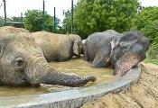 Raju relaxing in pool