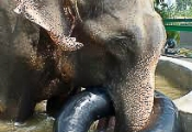 Raju playing with pool toy