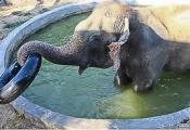 Raju playing with tube in pool