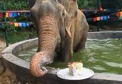 Raju eating his 1st Anniversary cake